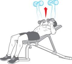 Incline Bench Dumbbell Rows Index Of Wp Content Uploads 2011 01