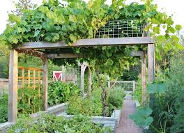 Trellis Landscaping Grape Trellis Landscape Farmhouse With Vegetable Garden Seattle