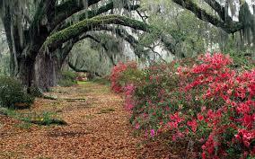 Flower Gardens Wallpapers - nature azaleea tree flowers forest flower garden wallpapers free