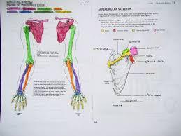 skeleton mrs johnson u0027s site