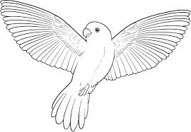 parrot coloring pages getcoloringpages