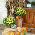 Where To Buy Corn Stalks For Decorating unac