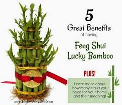 13 best feng shui lucky bamboo images on feng shui