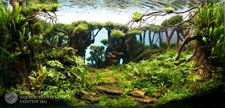 Planted Aquarium Aquascaping Awesome Planted Aquarium Looks Like A Jungle Aquascaping