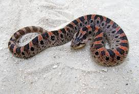 Found A Snake In My Backyard Is It Illegal To Kill A Snake State By State Gardening