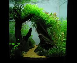 Aquascape Construction Epoxy 8 Best Fish Tank Ideas Images On Pinterest Aquarium Ideas Fish
