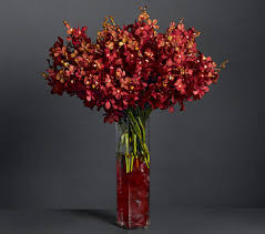 Free Vase Exotica Red Orchids With Free Vase Giftsmate