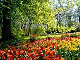 tulip field wallpaper 1600x1200 66751