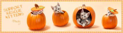 halloween kittens halloween archives kelly richardson
