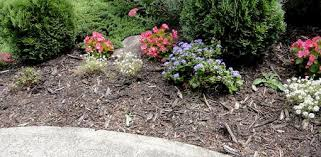 Landscaping Wood Chips by Does Wood Mulch Attract Termites And Other Insects Today U0027s