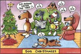 funny monday did anyone water the christmas tree