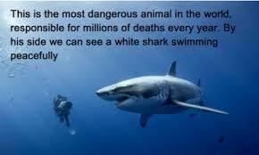 Shark Meme - good guy shark meme by sicnockle memedroid