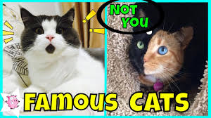 Cat Internet Meme - the most famous cats on the internet youtube