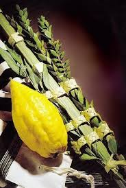 lulav and etrog for sale buy your lulav and etrog center city chabad
