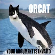 Lol Cat Meme - orcat cat hybrid meme lolcat lol funny pictures an roblox