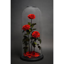 forever roses forever roses last 2 3 years i love these things pinterest