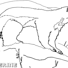 coloring pages wolverine animals archives mente beta