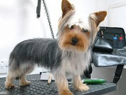 diy dog grooming table diy dog haircut gallery haircuts for men and women