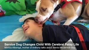 service dog assists sunrise boy with cerebral palsy youtube