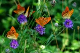 butterflies flowers that fly and all but sing your source for