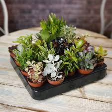 live indoor plants succulent mix plants house office live indoor pot plant