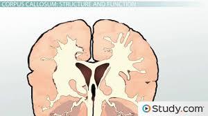 the brain hemispheres left brain right brain communication and