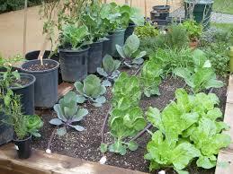 winter vegetable garden week 4