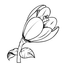 tulip flower vector drawing royalty free stock image storyblocks