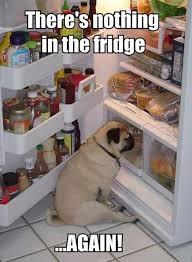 Fridge Meme - nothing in the fridge meme slapcaption com funny pictures