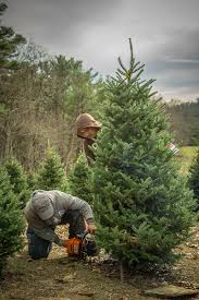 christmas christmas tree farm family tremendous farms near