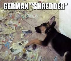 Shredding Meme - ahh caleb and the pup would have all much fun shredding lol dogs