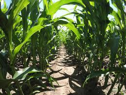 dtn the progressive farmer innovations in the field