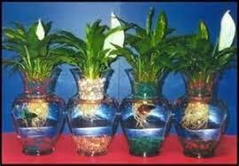 Betta Fish Vase With Bamboo Betta Fish Plant Vase Peace Lilly Vase Vases Sale 2017 Fish
