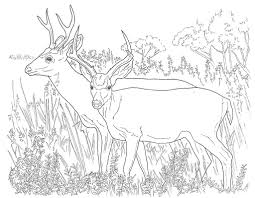deer coloring pages free printable coloring 965