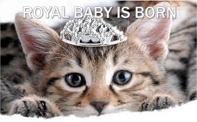 current event cat of the day royal baby picturesof cats tridanim