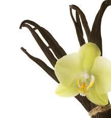 tahitian vanilla spice fragrance fragrance oils elements