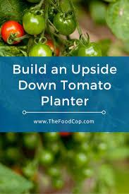 best 25 tomato planter ideas on pinterest upside down tomato