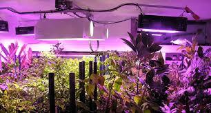 types of grow lights types of grow lights led plant lights black dog led