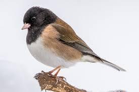 most common backyard birds in the u s