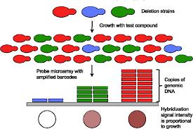 ijms free full text functional toxicogenomics mechanism