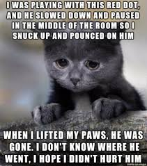 Sad Cat Memes - sad cat diary is hilarious check this out missmeowni