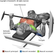 Bench Press Program Chart Flat Bench Press Gym Workout Chart