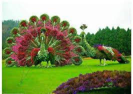 61 best miracle garden dubai the world u0027s largest natural flower