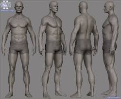 Human Male Anatomy 68 Best Anatomy For Artists Whole Body Images On Pinterest