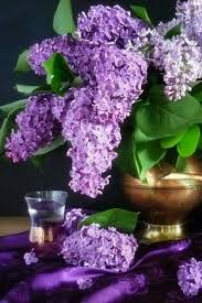 17 best lilac cottage images on pinterest beautiful cottage and