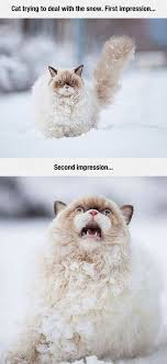 White Cat Meme - this cat s first impression of snow is exactly how i feel about it