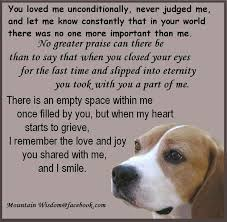 grieving loss of pet 375 best dog heaven and pet loss images on pets dog