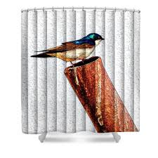 Curtains With Rings At Top Male Tree Swallow No 1 The Slat Collection