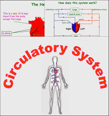 chsh teach circulatory system teaching materials resources