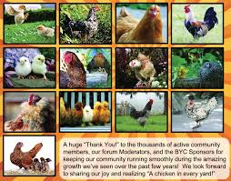 newest official book of byc gardening with free range chickens
